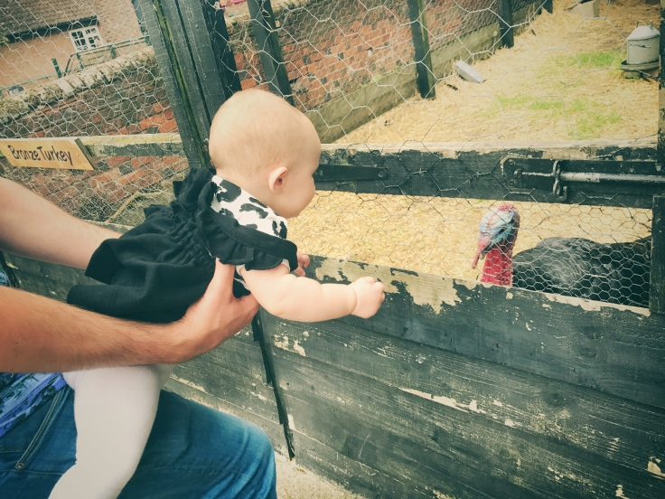Standalone farm - standalone farm review - Hertfordshire - Hertfordshire days out